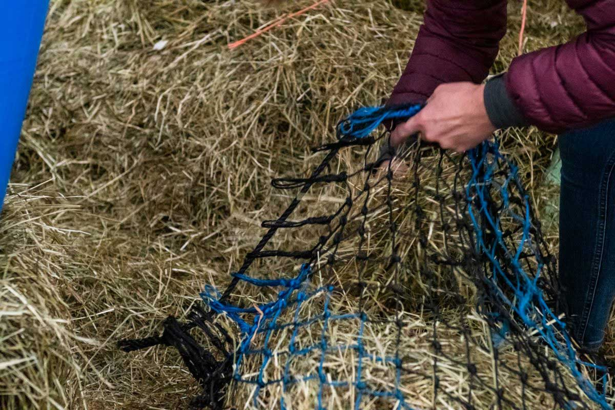 How much conserved forage does my horse need each day?