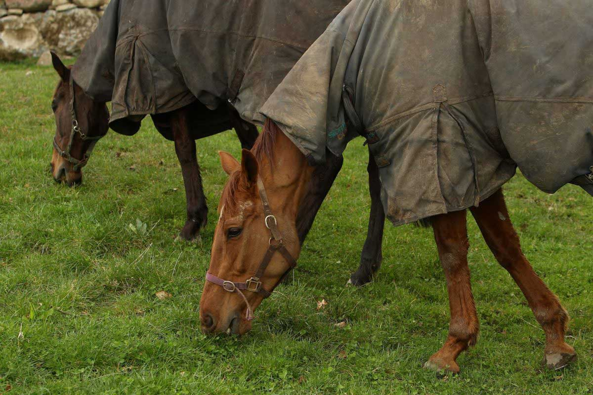 Will grass provide my horse with a balanced diet?