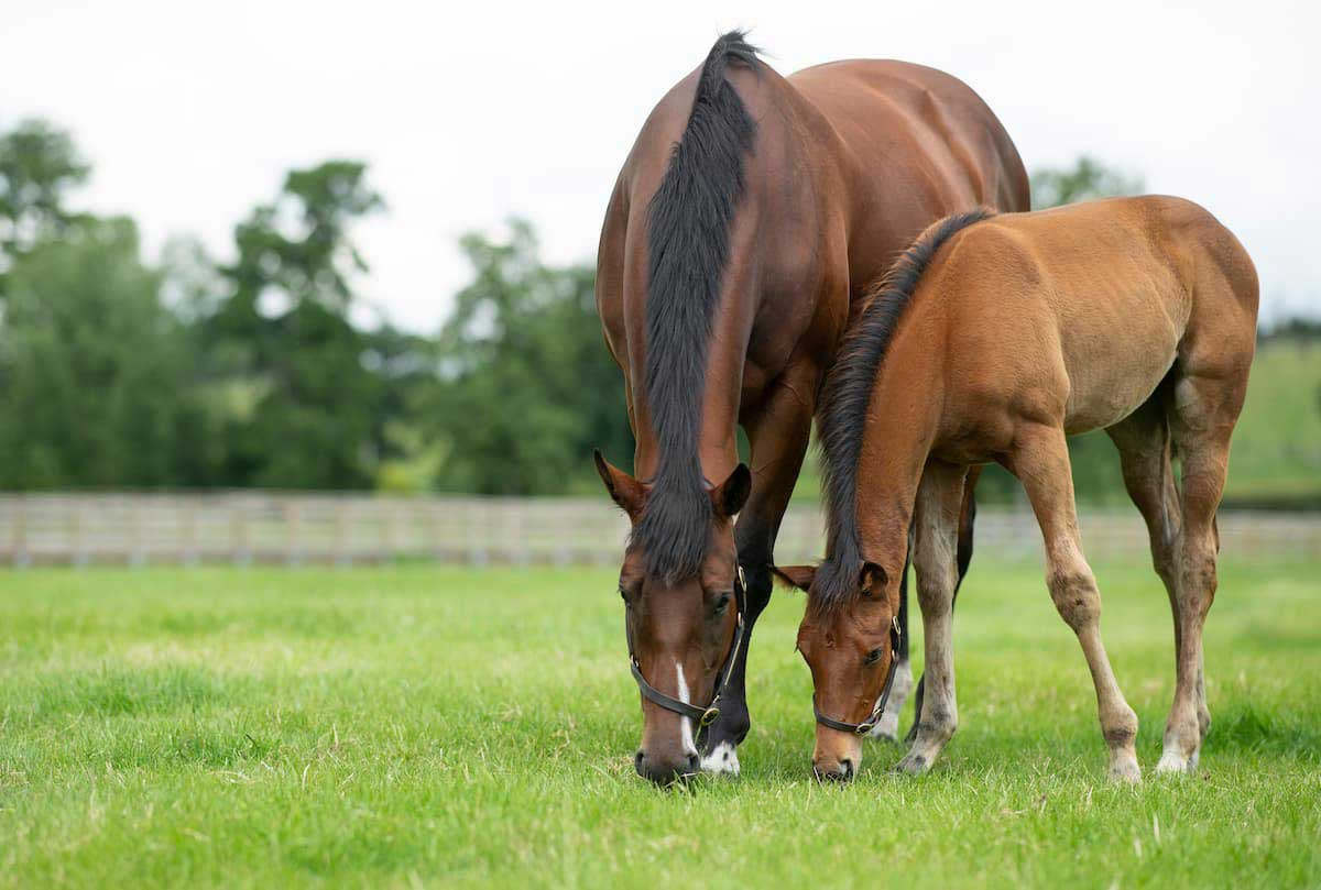 Which feeds are most suitable for broodmares in late pregnancy?