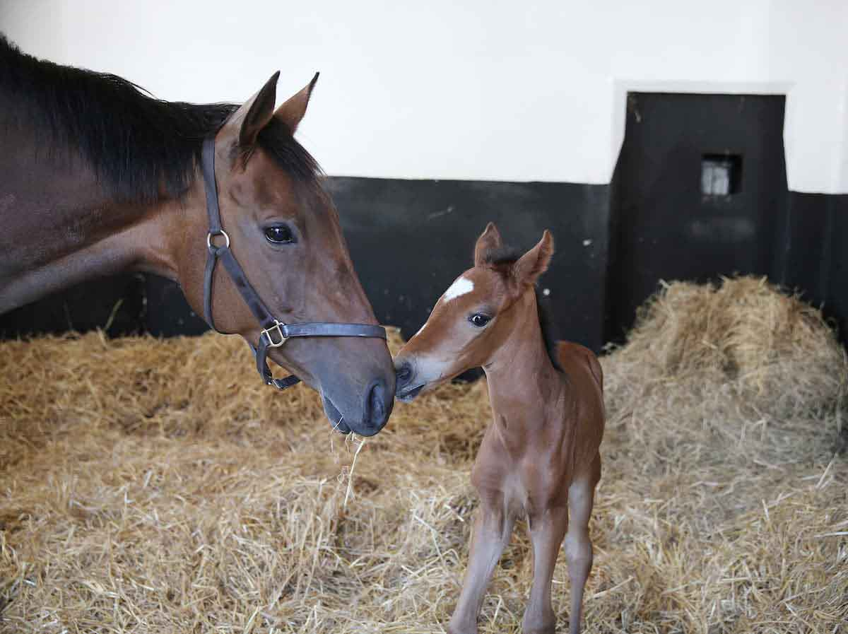 The Nursing Foal and Early Nutrition