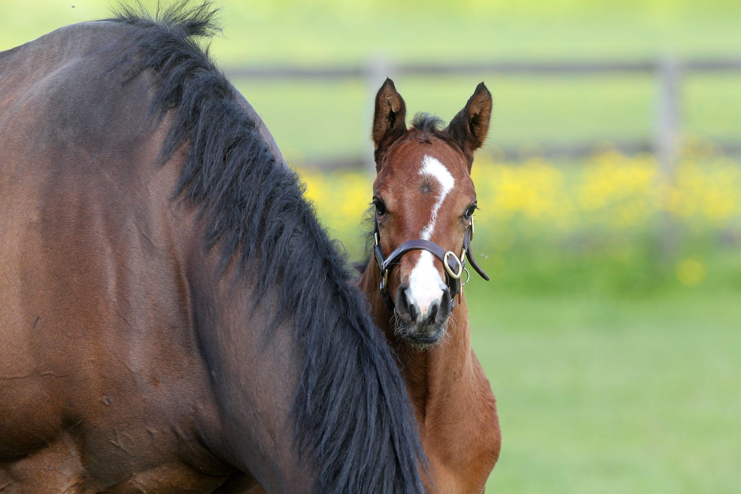 Foaling Season Ready? – Tips for Tackling your Foaling Kit