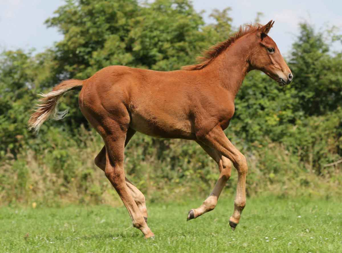 Essential Nutrients for Bone Growth in Young Horses