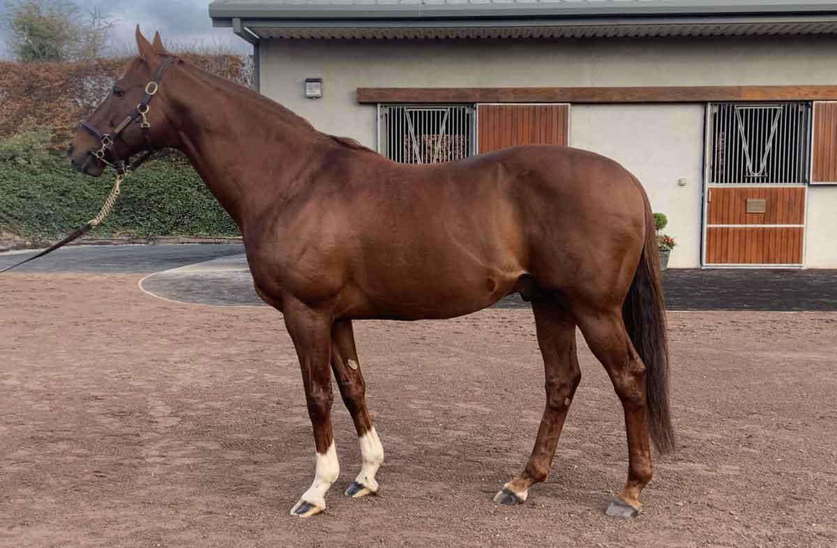 Feeding the Stallion to Maximise Performance and Fertility