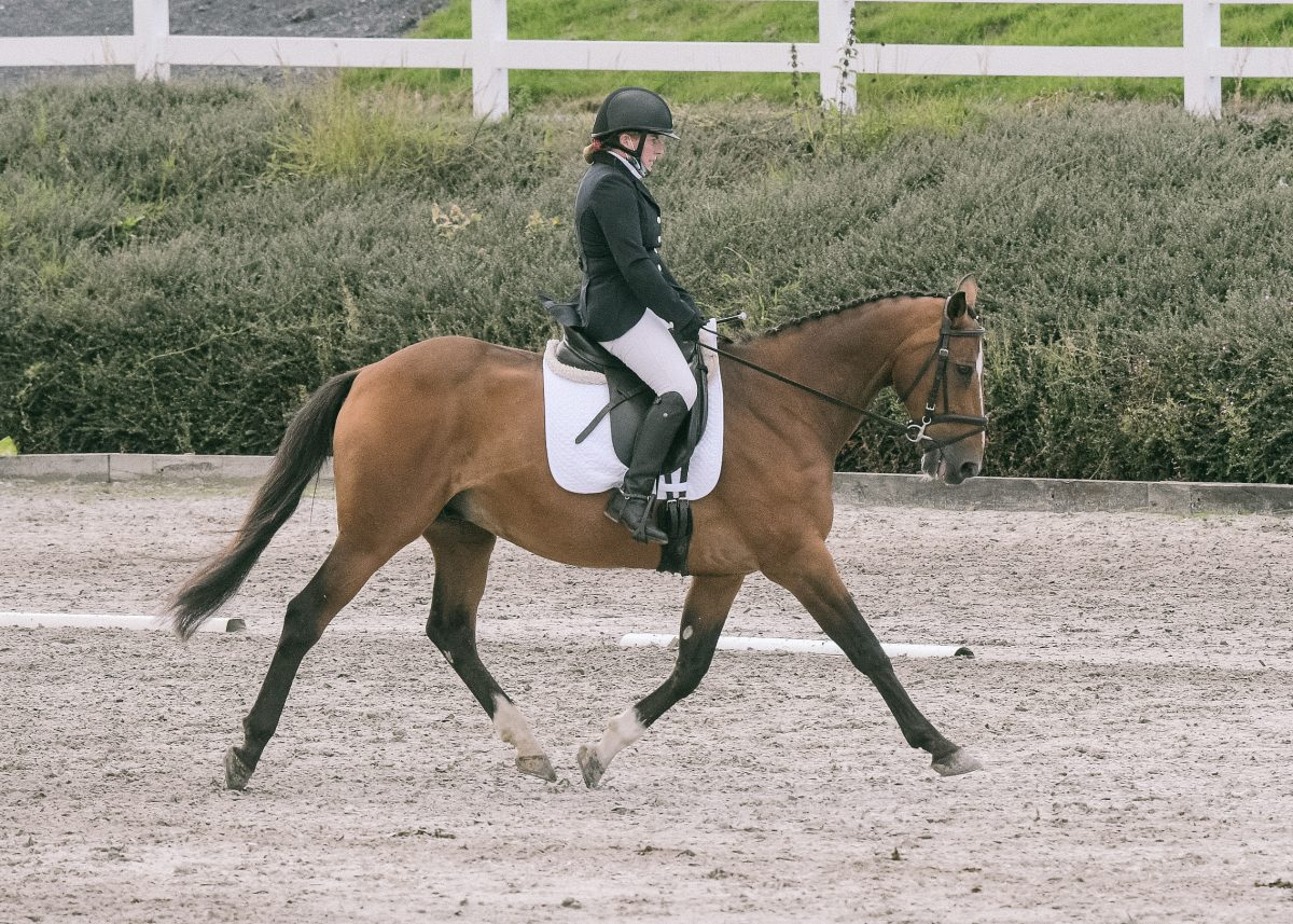 Wexford rider lifts Connolly's Red Mills national dressage title on veteran horse