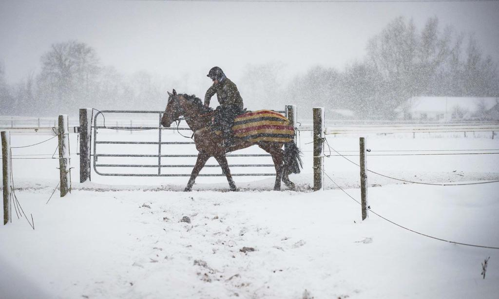 Cold Weather Tips for Horse Owners