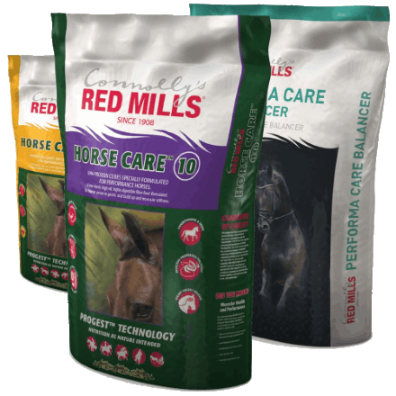 What are the latest products launched for feeding competition horses and what makes them different?
