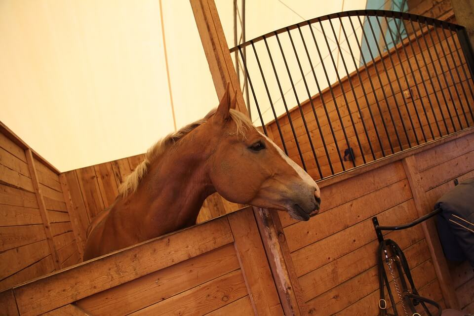 New Year's Resolution for Feed & Tack Rooms