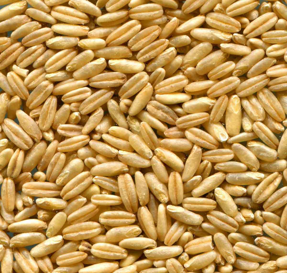 Can I feed straight oats?
