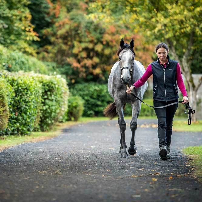 Exercising the Sales Yearling